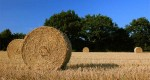 Bales of hay. Photo from http://www2.gfb.org/commodities/hay.html