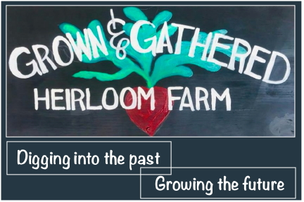 Grown and Gathered Heirloom Farm; digging into the past, growing the future